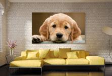 photo-chien-geante-sur-canape-plexiglas