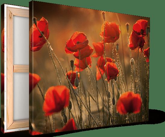 photo-sur-toile-champs-fleurs